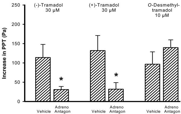 adrb3 antibody