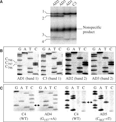 characterization nucleic acids Characterization of nucleic acid higher order structure by gas-phase h/d exchange in a quadrupole-ft-icr mass spectrometer jingjie mo, gabrielle c todd, kristina ha kansson.