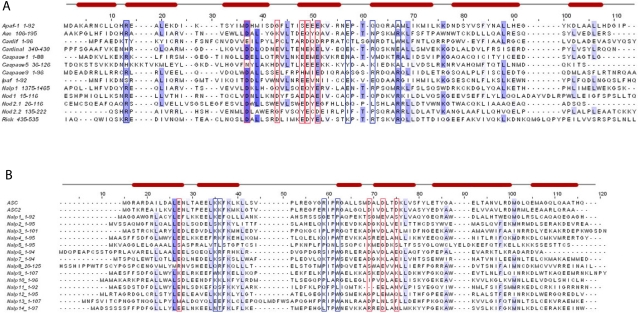 G patch domaincontaining protein 1